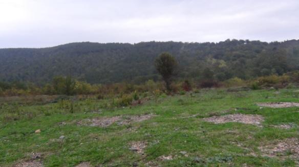 POGGIO AL CERRO 2012